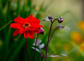 一组美丽的花朵壁纸图片