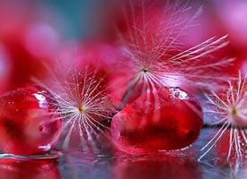 石榴的果粒像是一滴冰藍的淚滴
