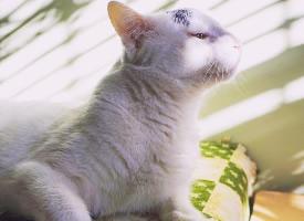 聰明活潑的小貓圖片