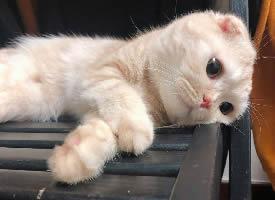 搞怪可愛的小貓圖片