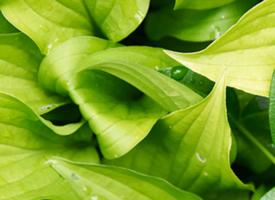 护眼清新绿色叶子手机壁纸