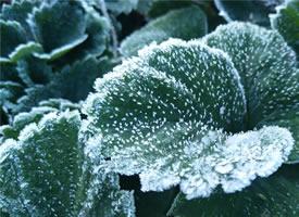 漂亮的霜花唯美高清桌面壁纸