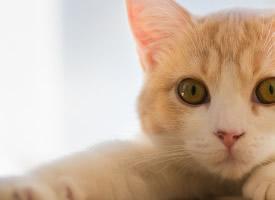 可愛小貓手機壁紙大圖