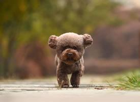 像一个软球球的小狗狗图片欣赏