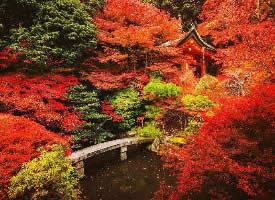 日本醍醐寺,喜欢这种寂静美