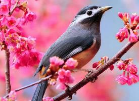 可爱的野外鸟儿图片