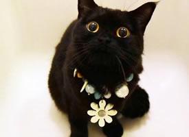 黑得就剩兩只眼的黑喵,長得太古靈精怪啦