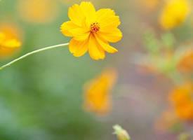 花開花落,那是起伏的人生
