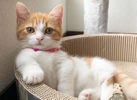 一只超級可愛呆萌的小貓咪圖片欣賞