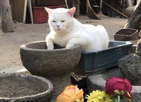 花叢中的小貓咪 悠閑又自在