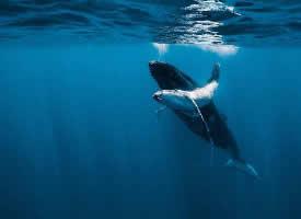 海深时见鲸  