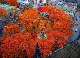 秋日魁北克的紅色楓葉