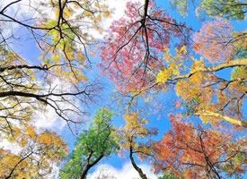 秋天真的是一個思念的季節啊