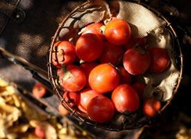 迷人的秋日的光影下的柿子