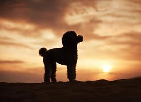 一群在内蒙旅行的狗狗拍摄图片欣赏