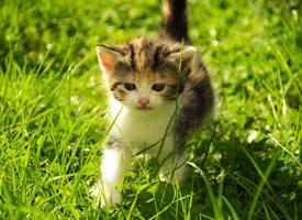 一組迷人可愛的小貓咪圖片欣賞