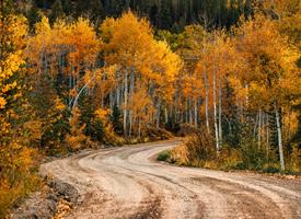 唯美秋天自然風景樹木圖片欣賞