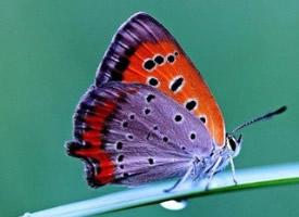 一组唯美的蝴蝶图片欣赏