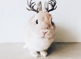 一只敲可愛的小兔子