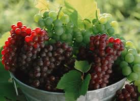 一組亮晶晶超新鮮的葡萄圖片
