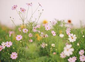 一組小清新養眼的花朵圖片欣賞