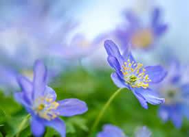 唯美好看的花卉圖片電腦壁紙