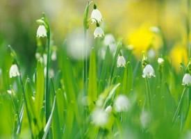 绿色风景唯美壁纸图片