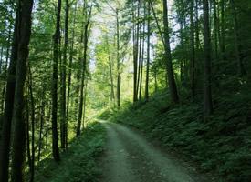 曲徑通幽的森林小路圖片欣賞