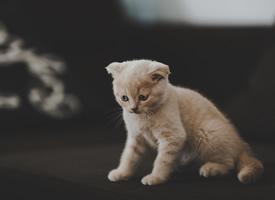 可愛的小貓咪高清電腦壁紙