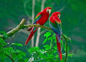 一对可爱的鸟儿图片欣赏