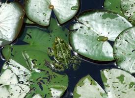 一组农民伯伯的好朋友青蛙图片