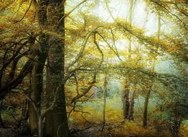清新唯美秋季森林風景桌面壁紙