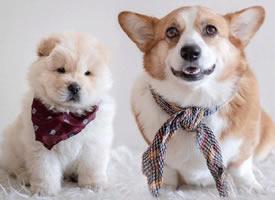 一组可爱的两个好朋友狗狗图片