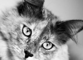 一组非常有意境的猫咪黑白图片