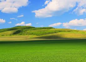 清新护眼绿色草原美景桌面壁纸