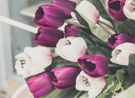 簡約唯美的花朵圖片