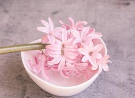 一組浪漫美麗的粉色風信子圖片