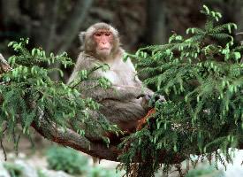 一组超萌的猴子高清图片欣赏