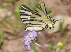 一组停在植物上的蝴蝶图片欣赏