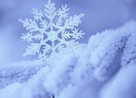 一組晶瑩剔透的雪花高清圖片