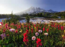 缤纷绚丽的花海图片