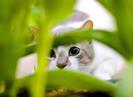 一組淘氣機靈的萌寵貓咪圖片