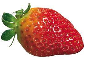 小清新草莓水果圖片大全