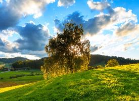 一组绿油油的草坪图片