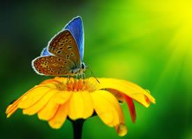 一组唯美的蝴蝶近距离图片