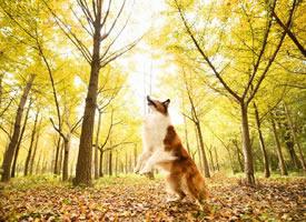 一組超級好看的小狗狗拍攝圖片