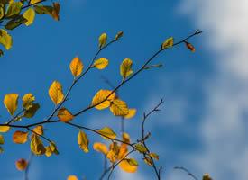 一組唯美的金黃色落葉圖片欣賞