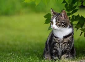 正在賣萌的小貓咪各種表情圖片