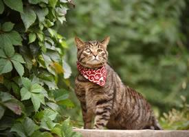 炯炯有神的左眼,身姿雄壯威風凜凜的貓貓