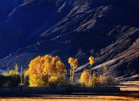 西藏日喀則的秋天圖片欣賞